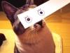 el-dibujo-animado-caras-gato-1