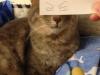 el-dibujo-animado-caras-gato-10