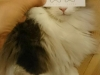 el-dibujo-animado-caras-gato-12