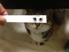 el-dibujo-animado-caras-gato-13