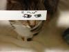 el-dibujo-animado-caras-gato-15