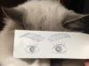 el-dibujo-animado-caras-gato-3