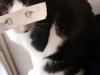 el-dibujo-animado-caras-gato-4