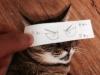 el-dibujo-animado-caras-gato-6