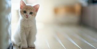 ¿Hace cuánto son domésticos los gatos?