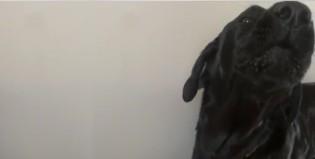 Conocé al perro que ladra…y canta