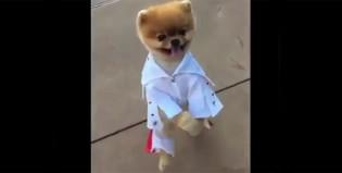 Elvis Presley reencarnó en un simpático perrito