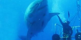 A este tiburón no lo hizo Steven Spielberg