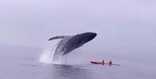La ballena vengadora