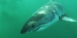 Tiburón se vengó de sus verdugos a pura mandíbula