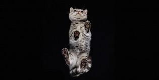 Gatos vistos desde abajo, una propuesta artística de Andrius Burba