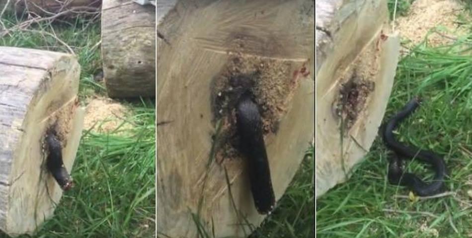 Taló un árbol y lo que halló en el interior lo sorprendió