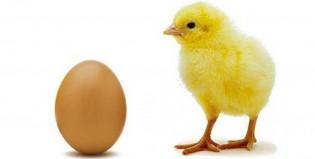 Planteo existencial: Un profesor respondió qué fue antes, ¿el huevo o la gallina?