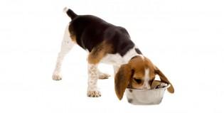 El drama oculto en el alimento balanceado para perros