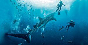 5 lugares para nadar con los gigantes del océano