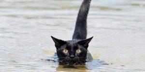 Está chequeado: el gato que ama nadar en el mar