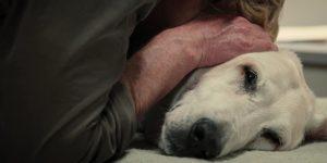 Descubrieron qué sienten las mascotas antes de morir