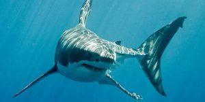 El espeluznante momento en el que una mujer cae a un tanque de tiburones