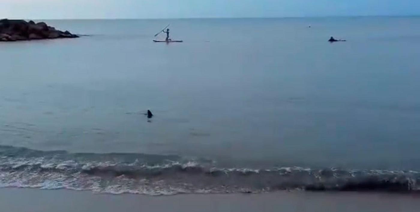 Un tiburón nadó cerca de la orilla en Santa Clara del Mar