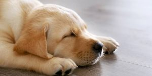 VIDEO: Entrenó a su perro para que se vaya a dormir en el momento en el que deja de jugar a la Xbox